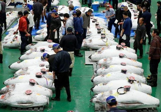 Toyosu Fish Market